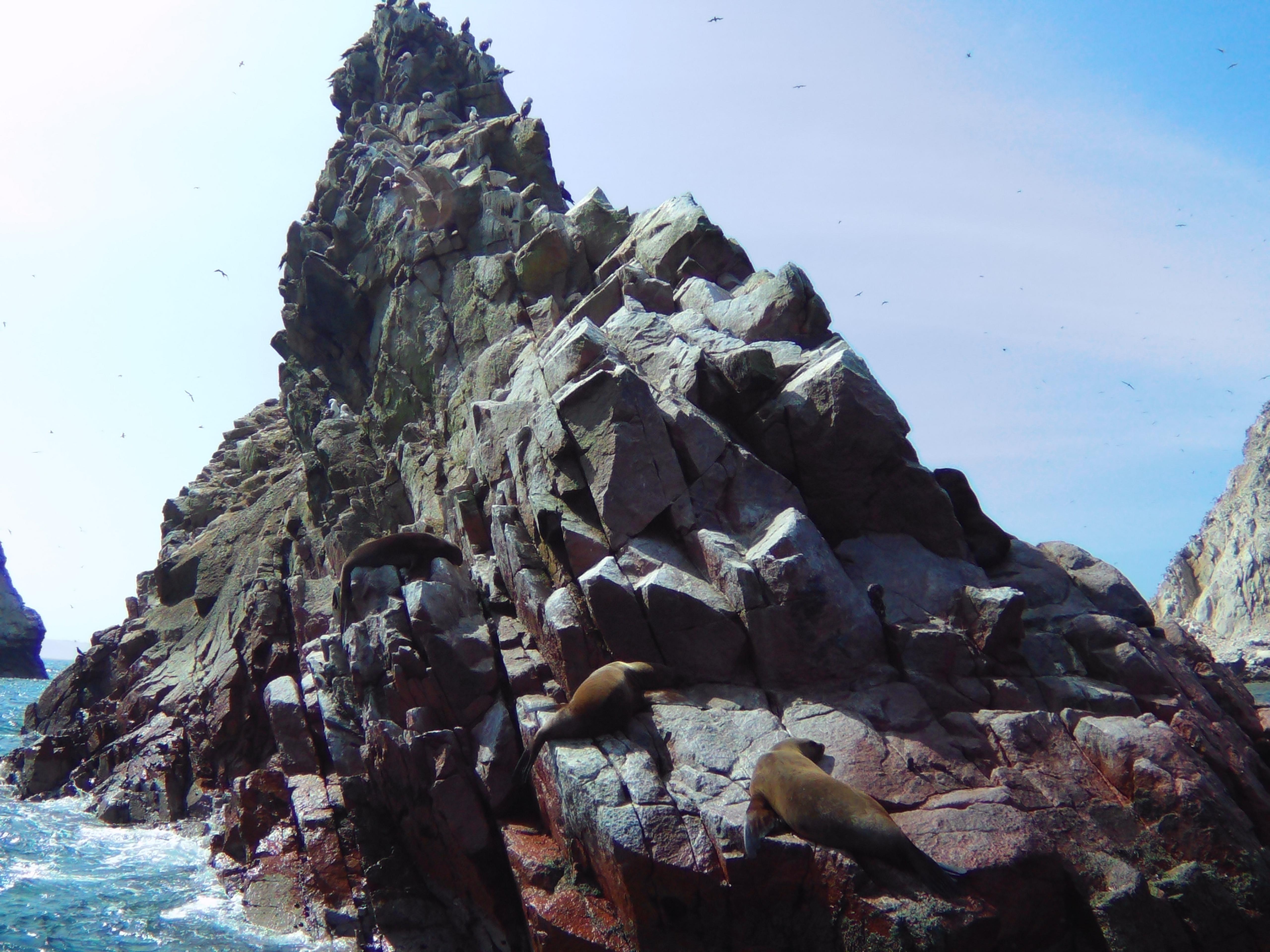 Sea lions sun bathing on the rocks in the Ballestas Islands