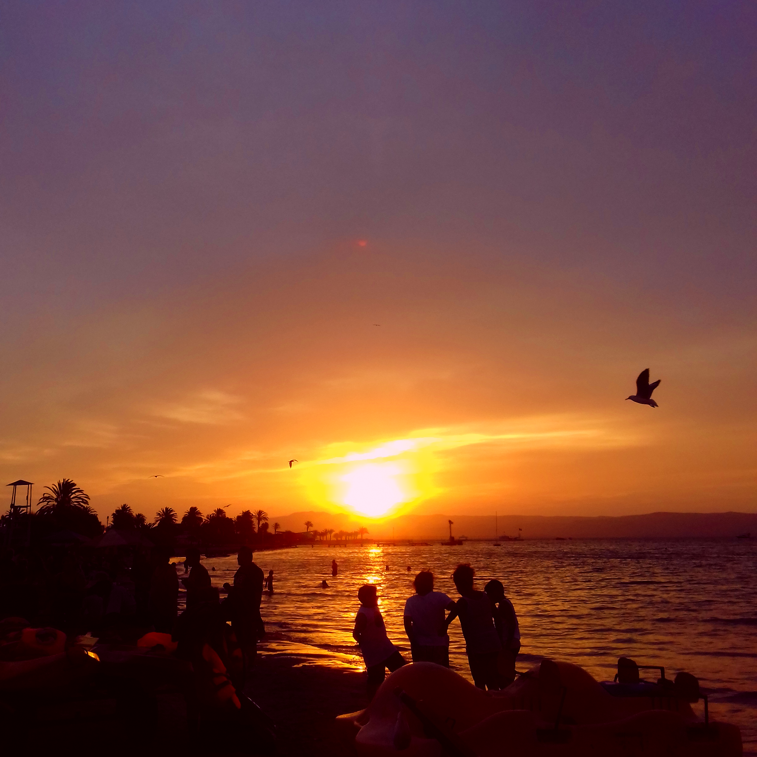 Sunset on a beach with people standing and birds flying