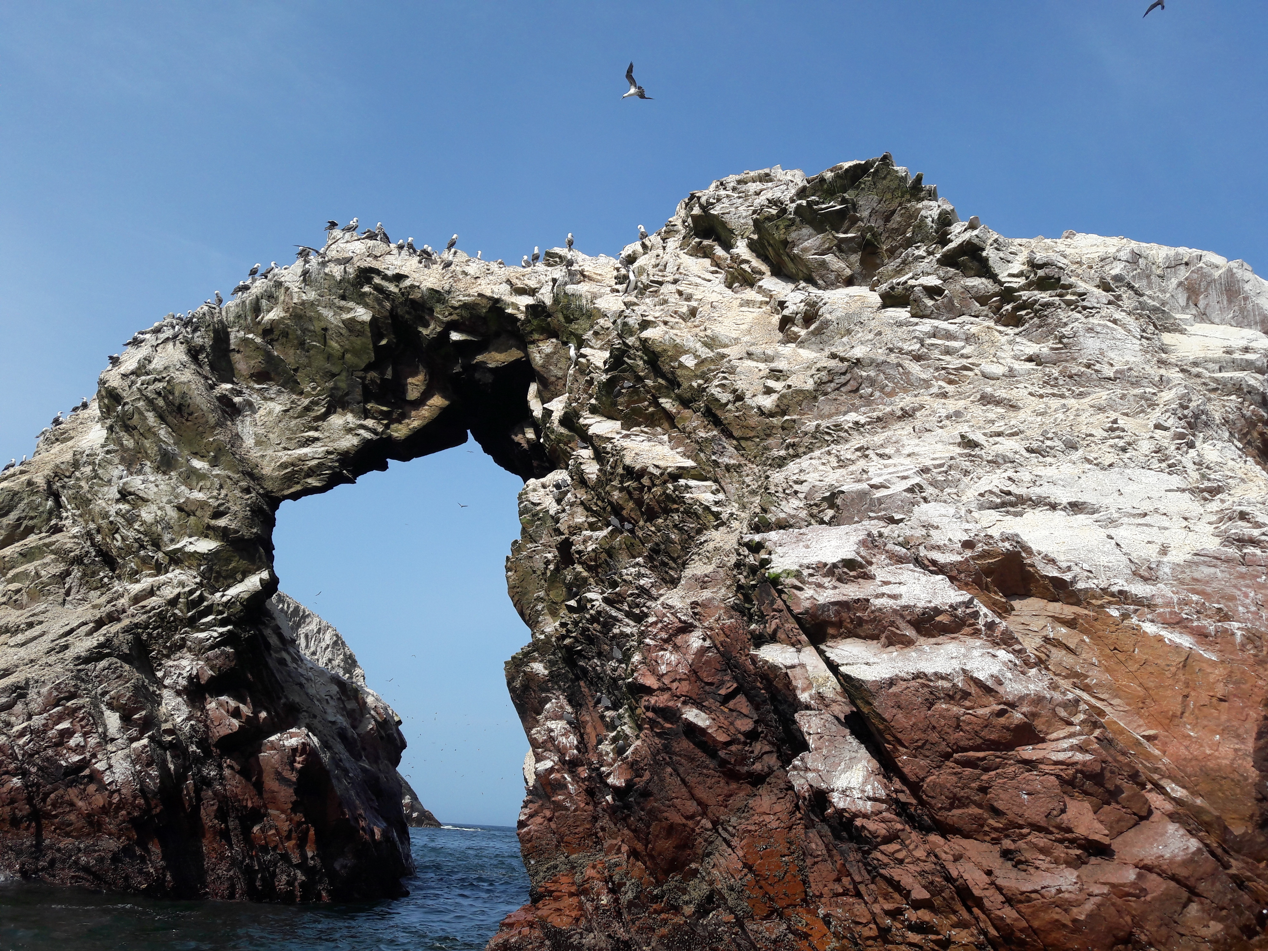 An arch shaped rock formation with seagulls
