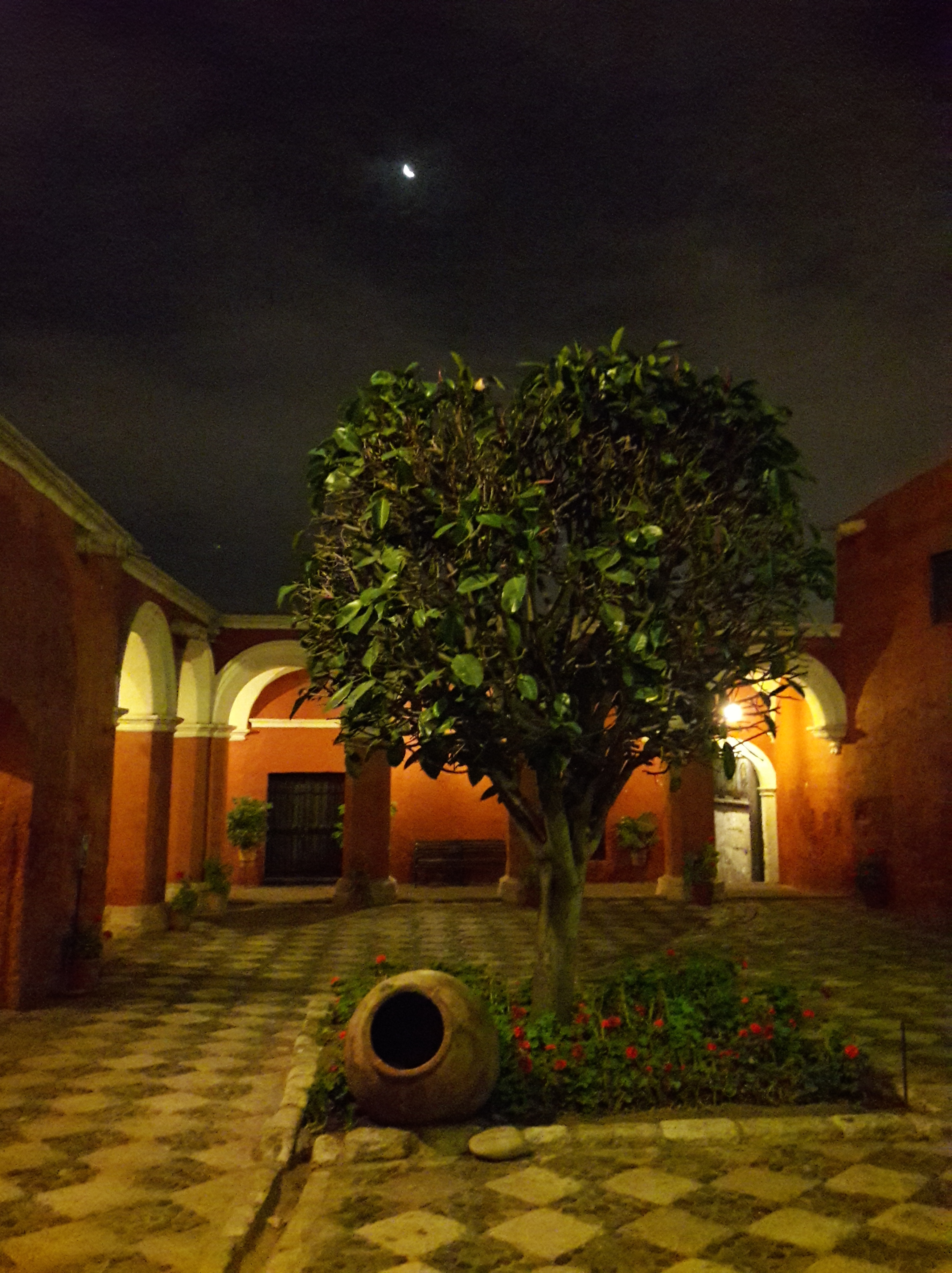 A tree. Arches in the background and a bright moon in the sky