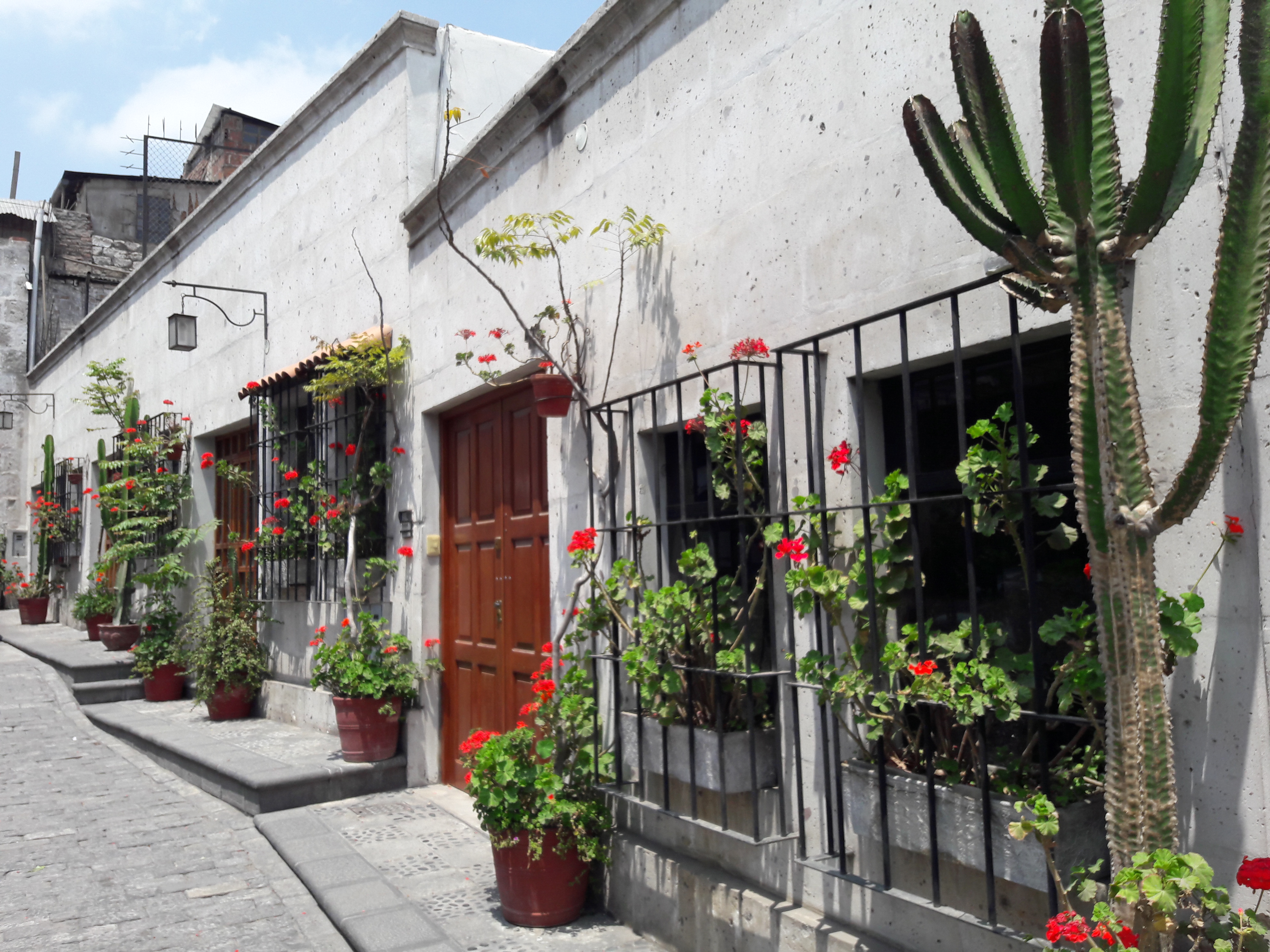 A street with houses with white walls. Cactus plants. Red flowers