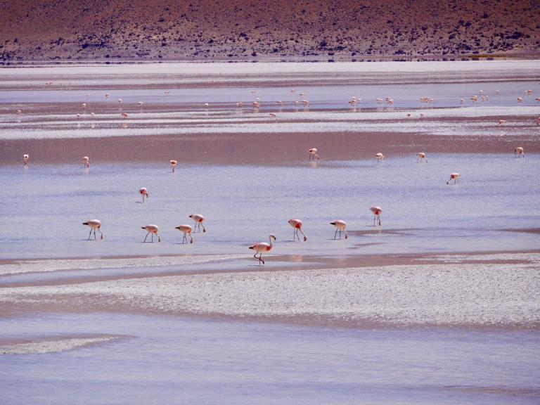 flamingos over a body of water