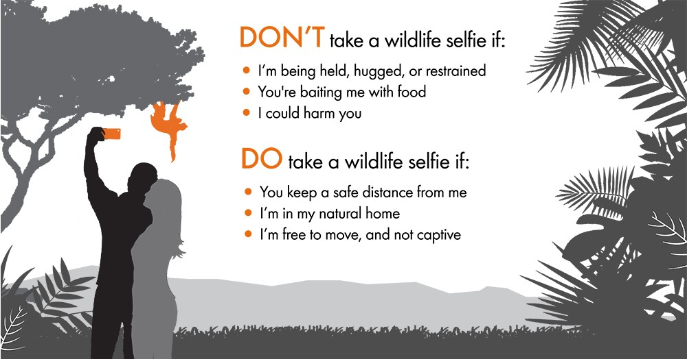 Don't take a wildlife selfie if I'm being held, higged or restrained, You are baiting me with food, I could harm you. DO take a wildlife selfie if you keep a safe distance, I'm in my natural home and I'm not captive